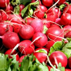 Radish Cherry Belle - Appx 1000 Seeds